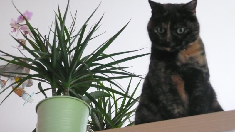 Les chats à adopter qui s'entendent avec les chiens P1010810