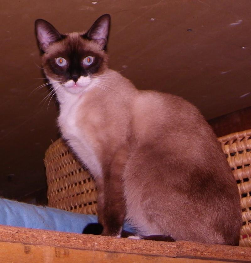 Photos des chats sauvés, avant/après Pipa_310