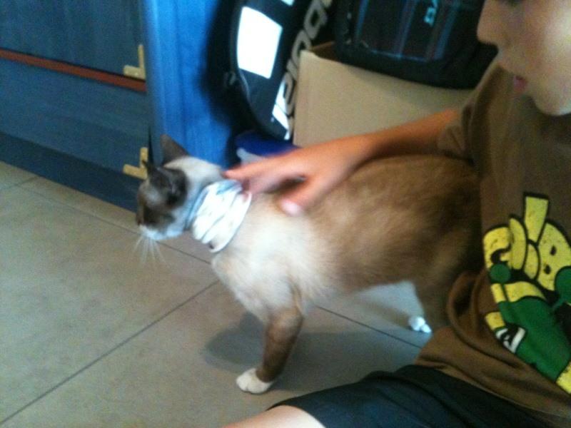 Photos des chats sauvés, avant/après Pipa_m10
