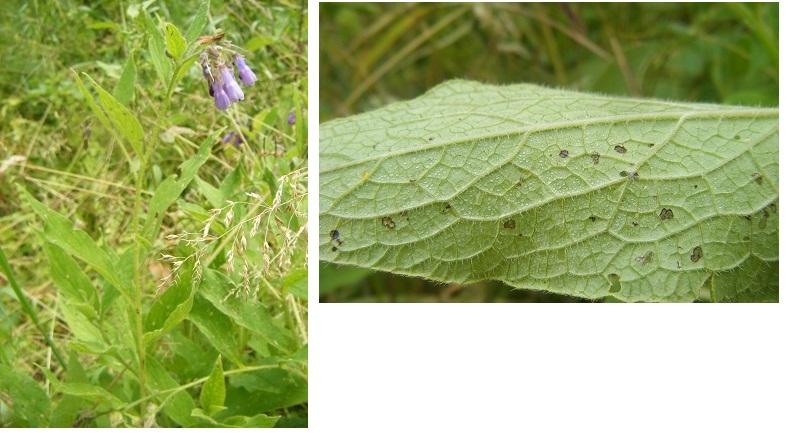 [Plantes] Reconnaitre les toxiques et mortelles Consou10