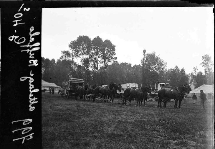 buffalo bill Buffal30