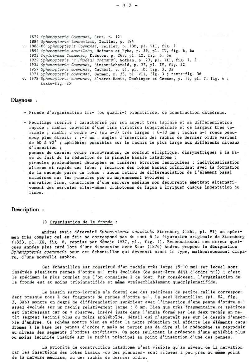 Rhodeites  Urnatopteris   Spheno10