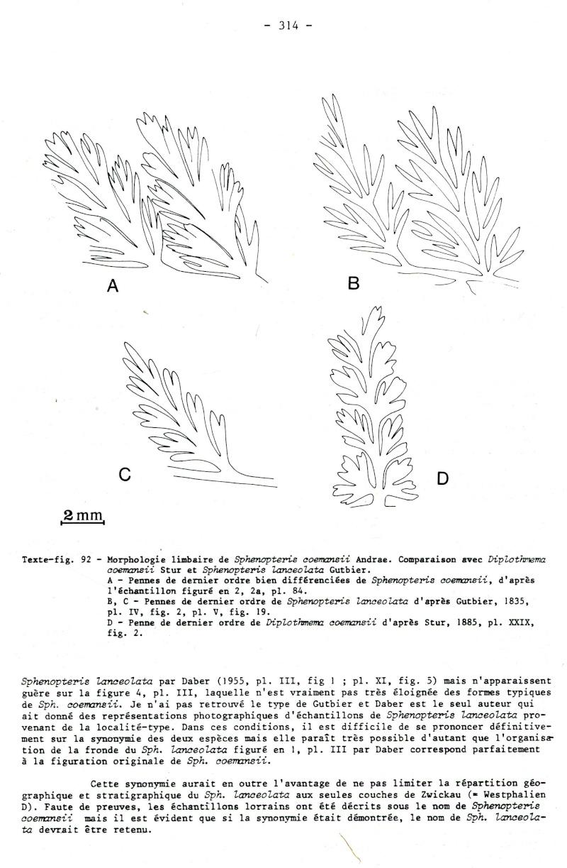Rhodeites  Urnatopteris   Spheno12