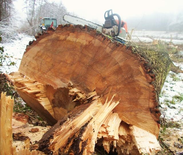 un arbre en hiver - participations Vivi_010