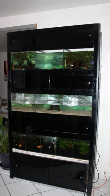 ma fishroom dans ma salle - Page 2 Nouvel10