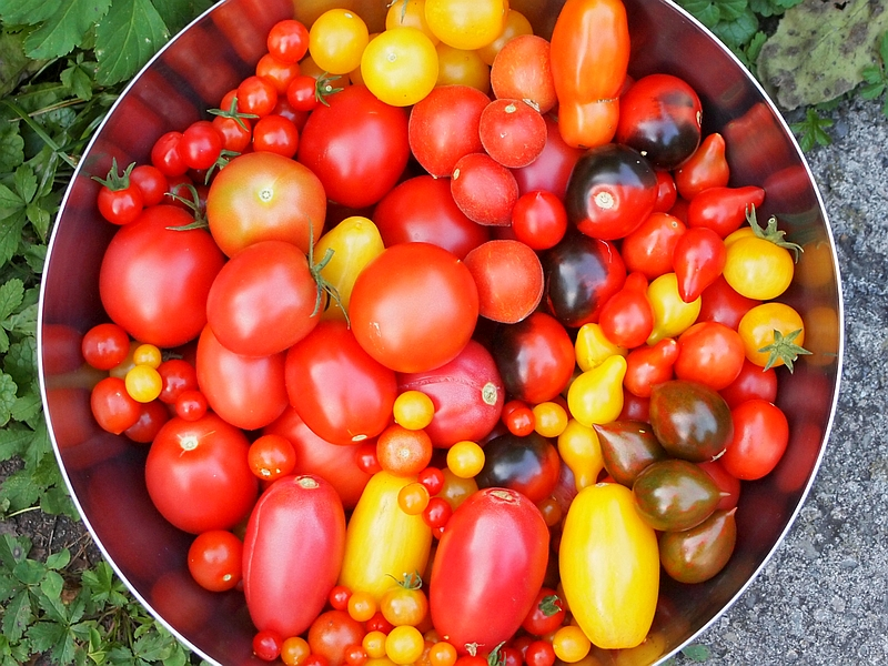 Unser erstes Gemüsebeet - Seite 21 P9050510