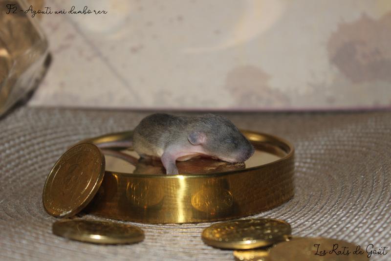 R2G Severus Waddiwasi xXx LVM-R2G Adria Ori Img_7718
