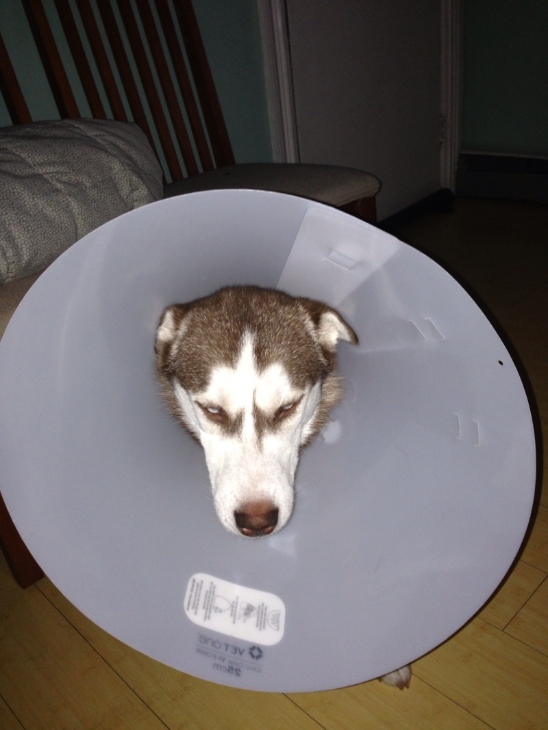 Luna is spayed finally :) - Page 2 Image22