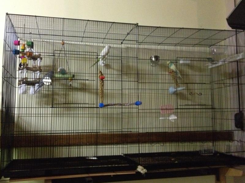 Vos avis sur ces cages Cage_f10