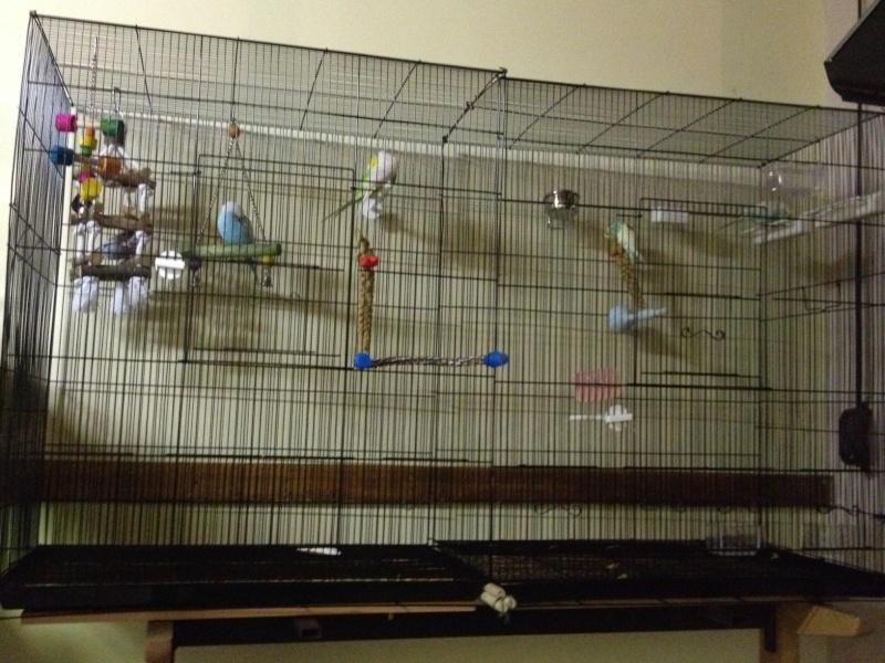 Vos avis sur ces cages Cage_f11