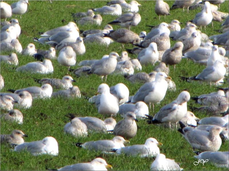Demain !!! comptage oiseaux des jardins Img_6211