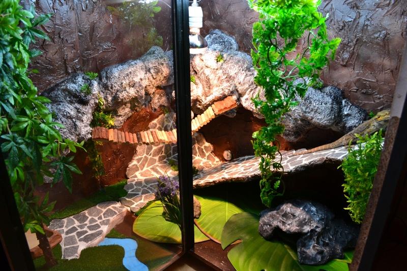 nouveau terrarium de mango Dsc_1110