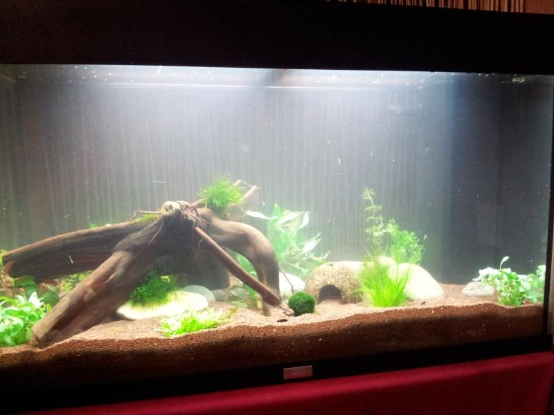 juwel rio 125 Litres 2013-011