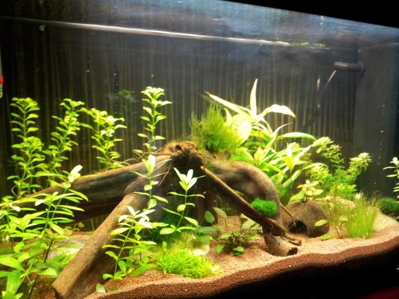 juwel rio 125 Litres 2013-024