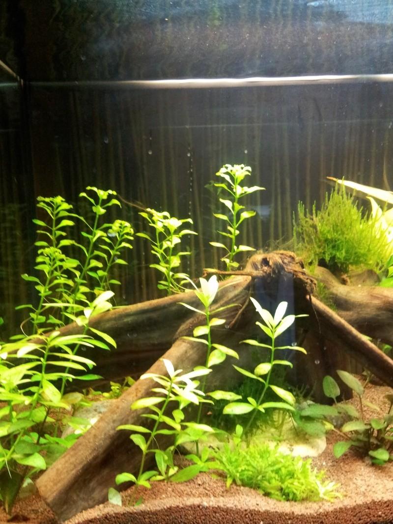 juwel rio 125 Litres 2013-025