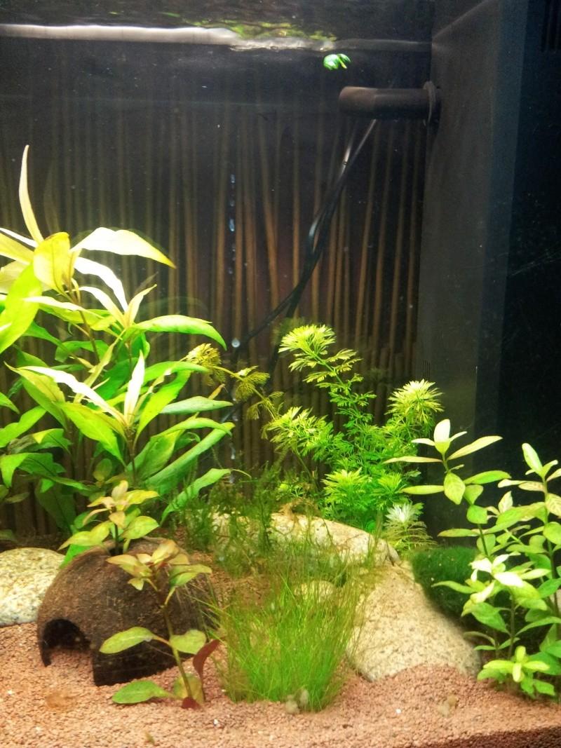 juwel rio 125 Litres 2013-026