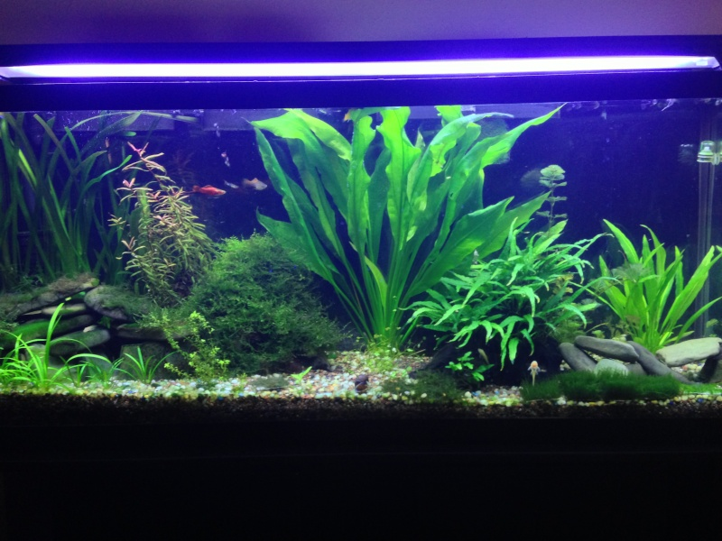 My 55 Gallon High Tech - Tons of Pictures! - Page 2 410