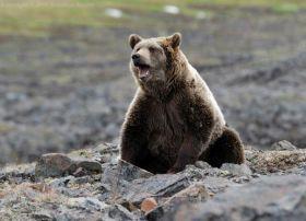 Охота на медведя Medved10