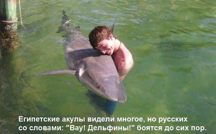 Шарм-эль-Шейх Akula10