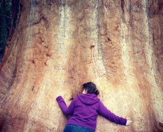 Tu BiShvat Tree_h11
