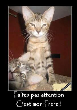 Humour en image ... - Page 6 57566210