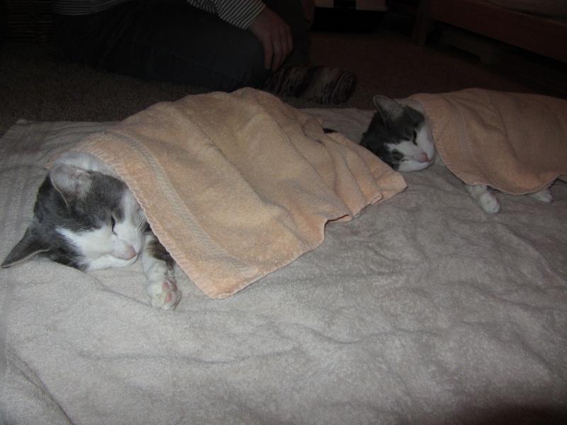 Cremecat's cats - Page 2 64410