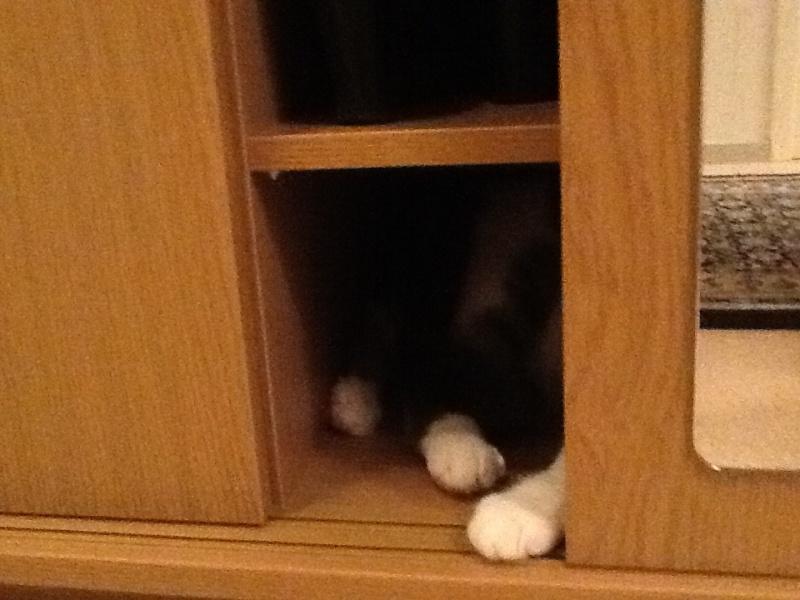 Cremecat's cats - Page 2 Image13