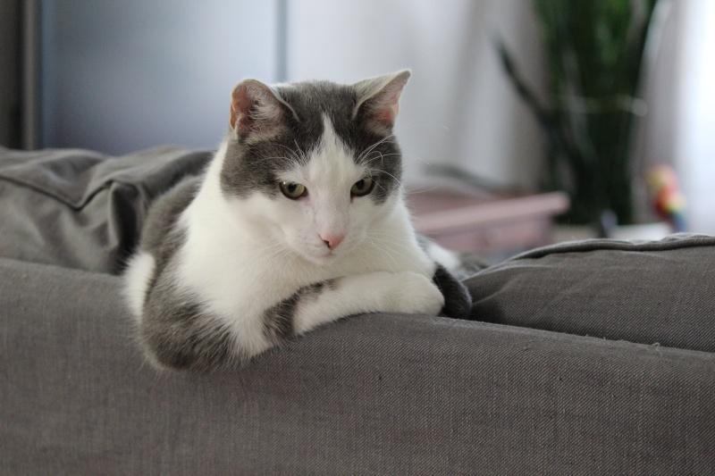 Cremecat's cats Img_0010