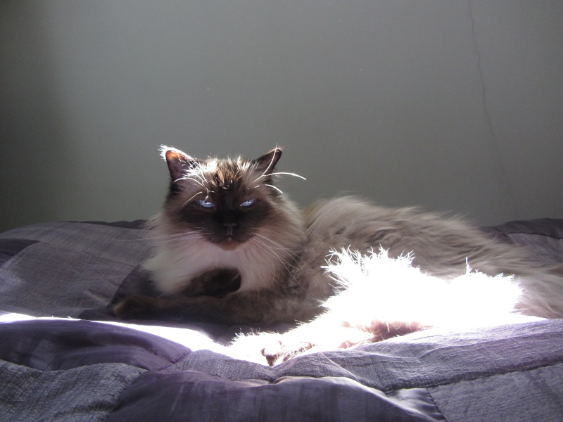 Cremecat's cats Img_0910