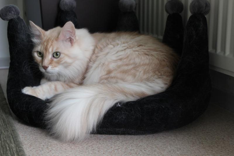 Cremecat's cats Img_1410