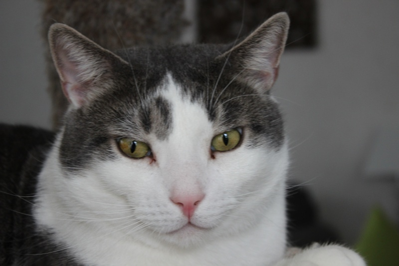 Cremecat's cats Img_1411