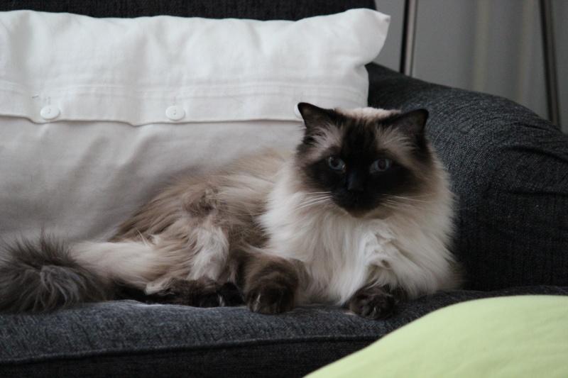 Cremecat's cats Img_3411