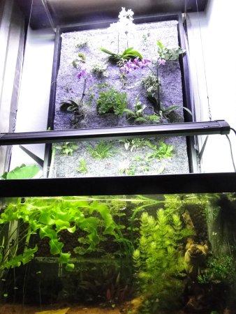 200L asiatique filtration aquaponique Dsc02318