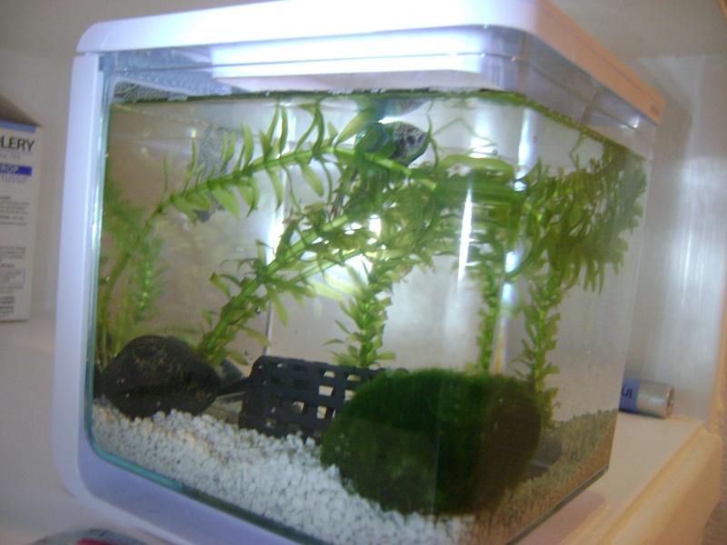 aquarium 2 L et bien être  de mon betta - Page 2 Dsc00411