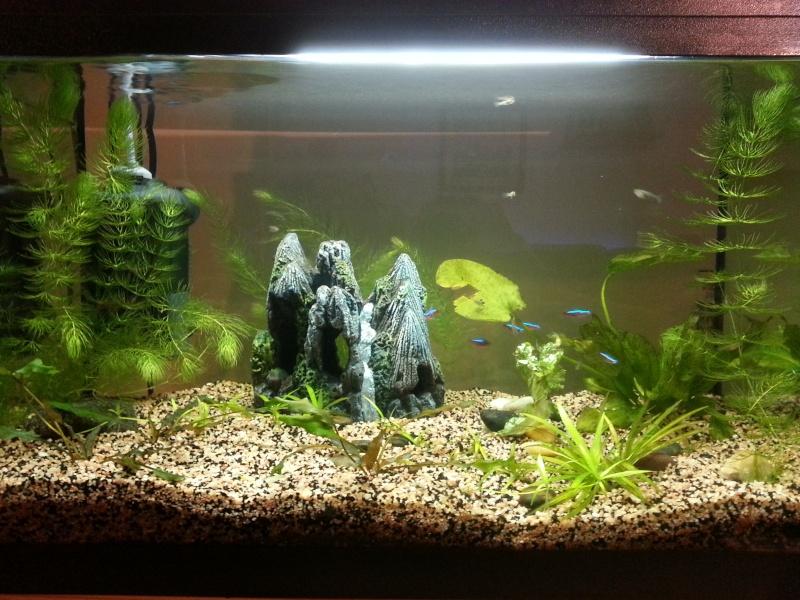 Mon aquarium de 60L 20130110