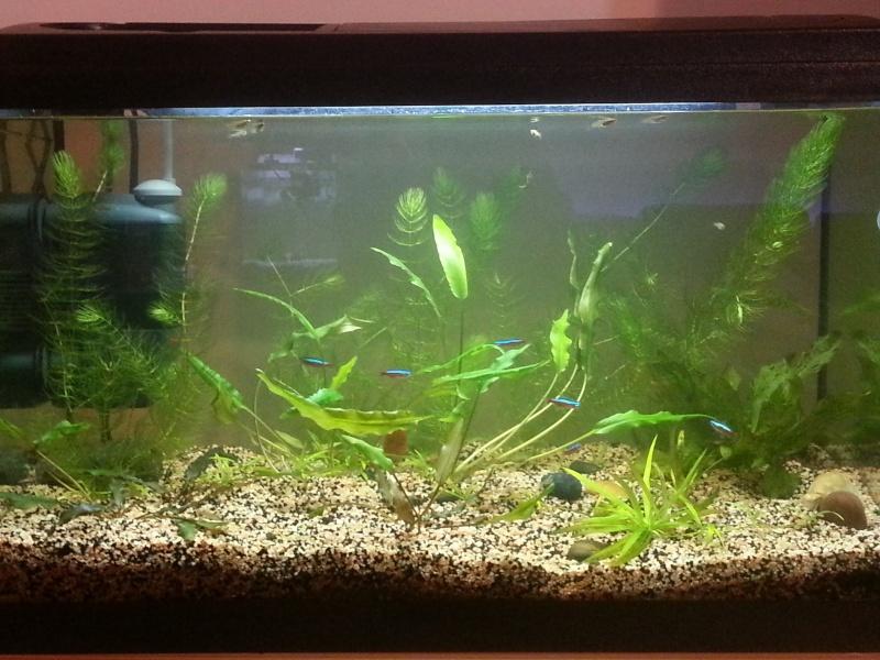 Mon aquarium de 60L 20130112