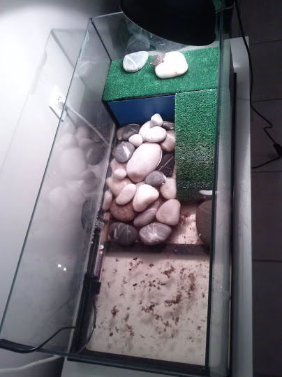 Besoin d'aide concernant ma tortue Cam00020