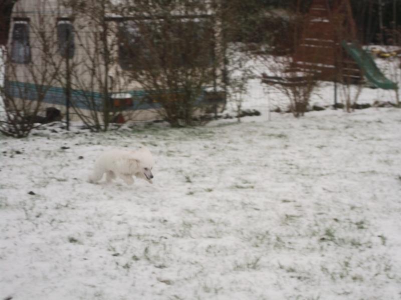 Ma canichette dans la neige 01010