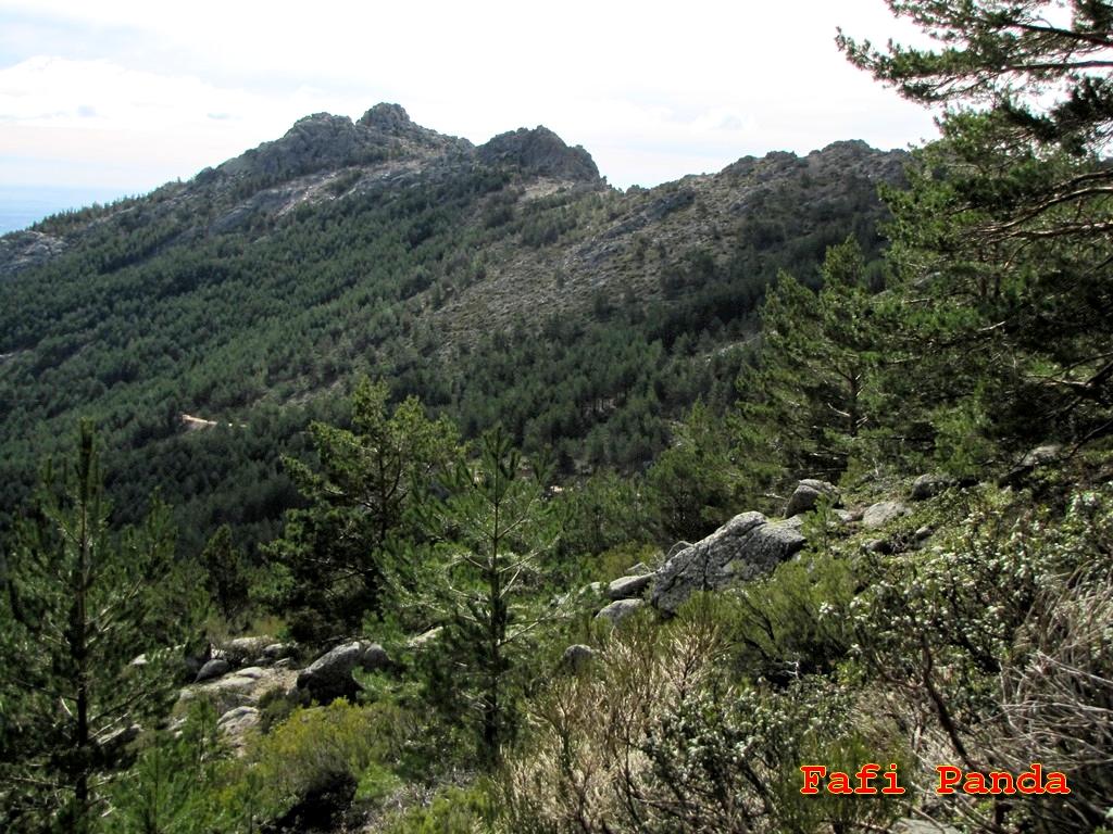 20200307 - CANTO COCHINO - SENDA DE LOS PORRONES 01354