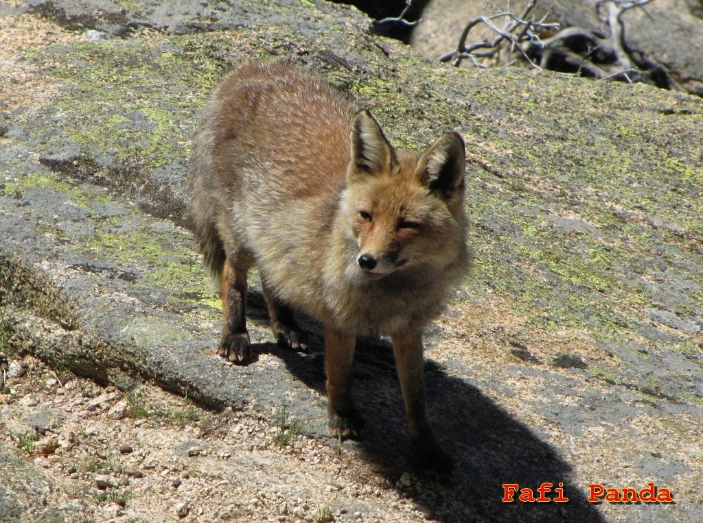 20190512 - ANIMALES DE LA PEDRIZA 029211