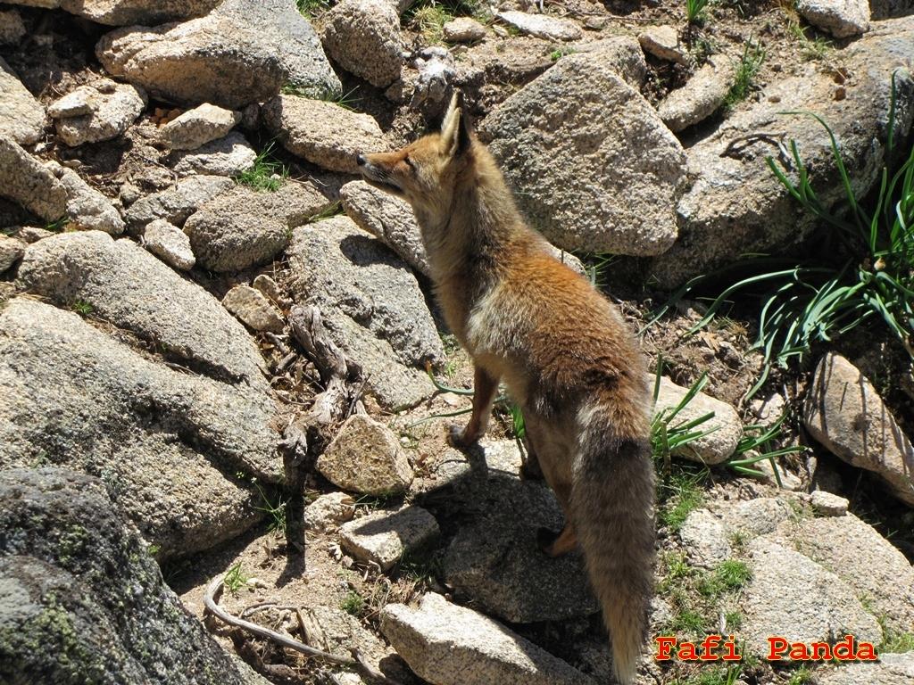 20190512 - ANIMALES DE LA PEDRIZA 03130