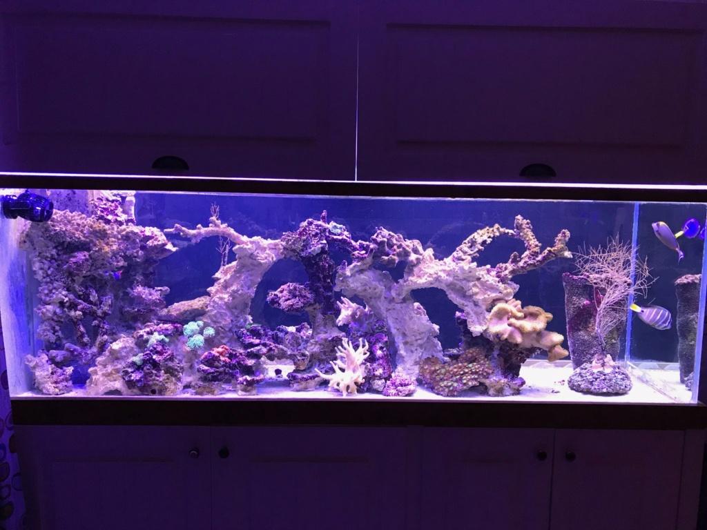 aquarium 800L Adrien - Page 10 Img_0010