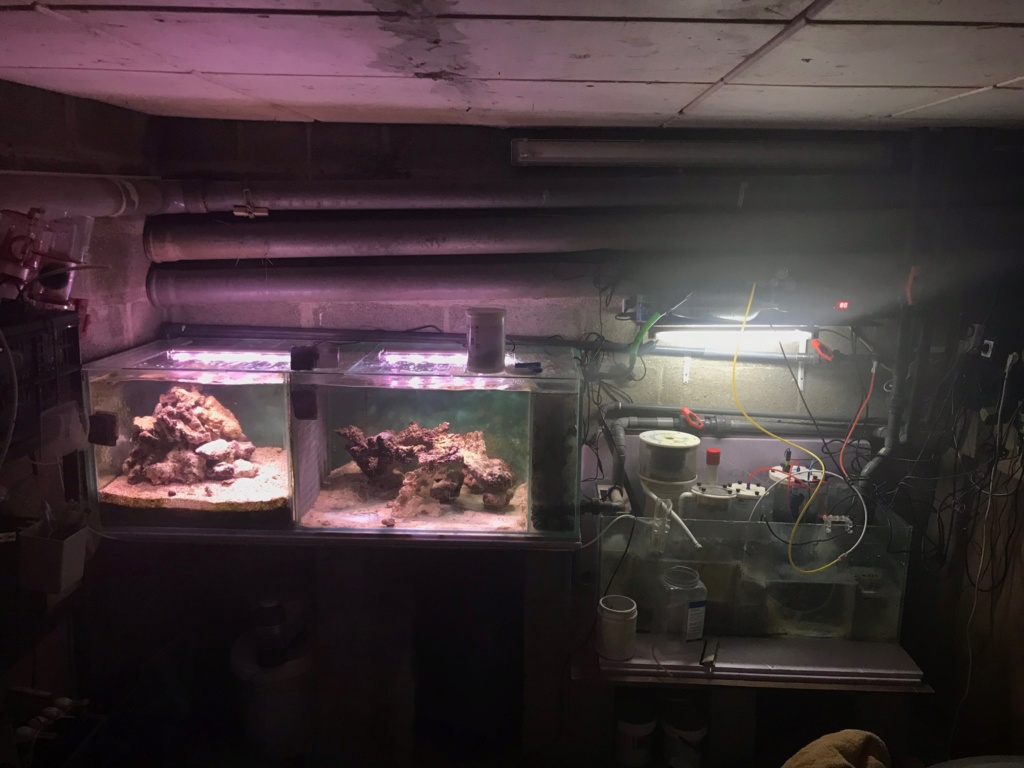 aquarium 800L Adrien - Page 10 Img_0011