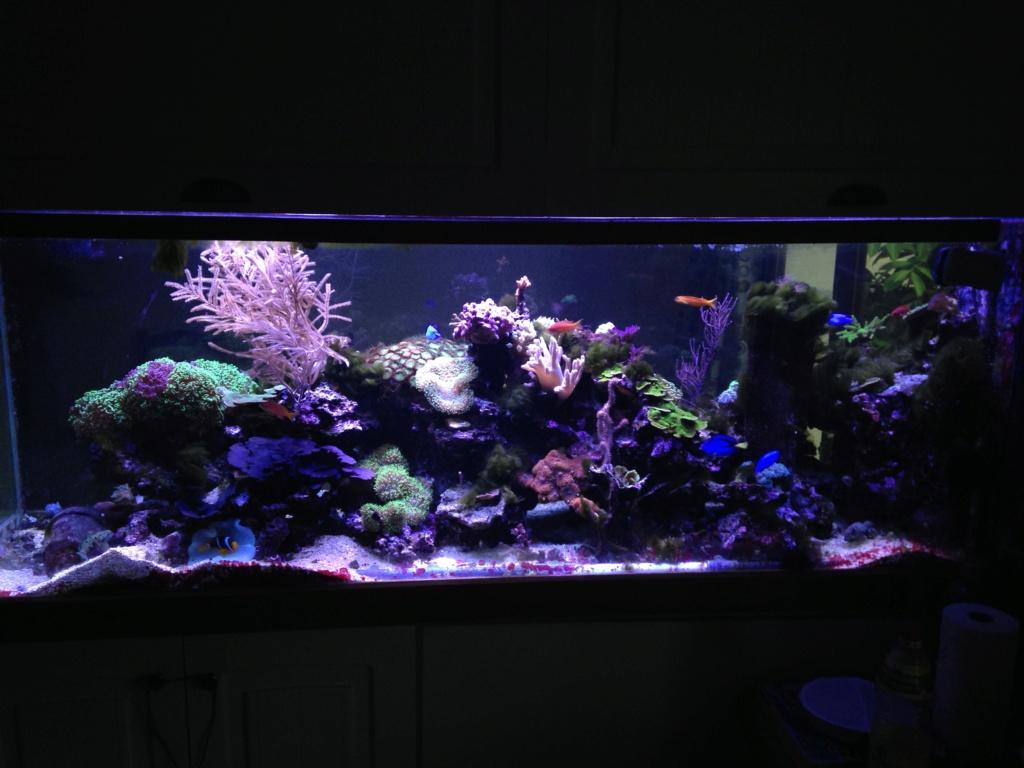 aquarium 800L Adrien - Page 10 Img_3010