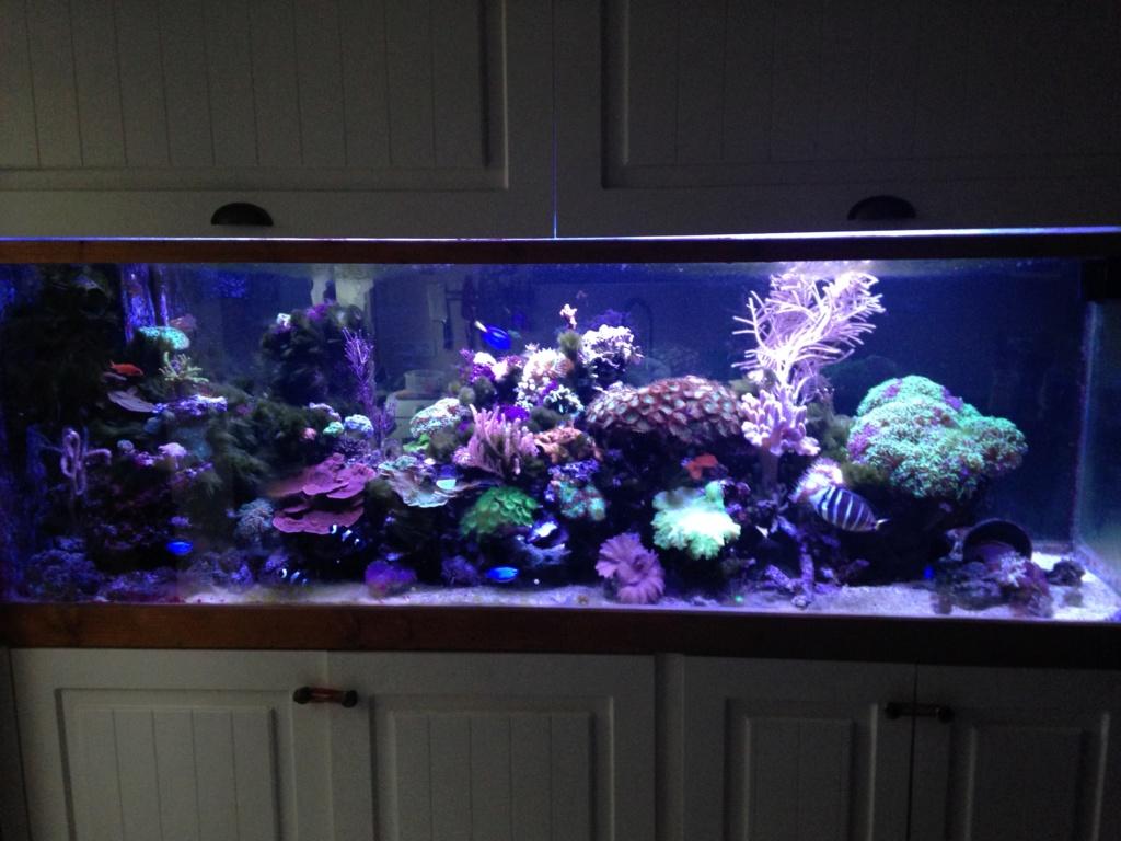 aquarium 800L Adrien - Page 10 Img_3011