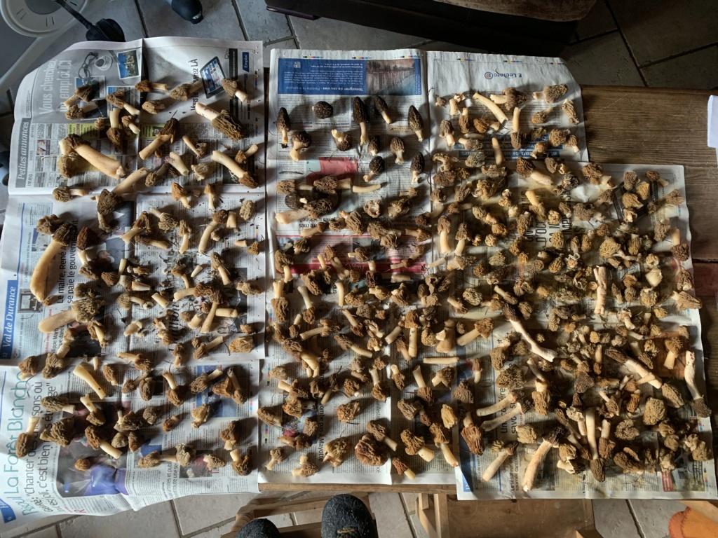 morilles - Page 3 Img_1215