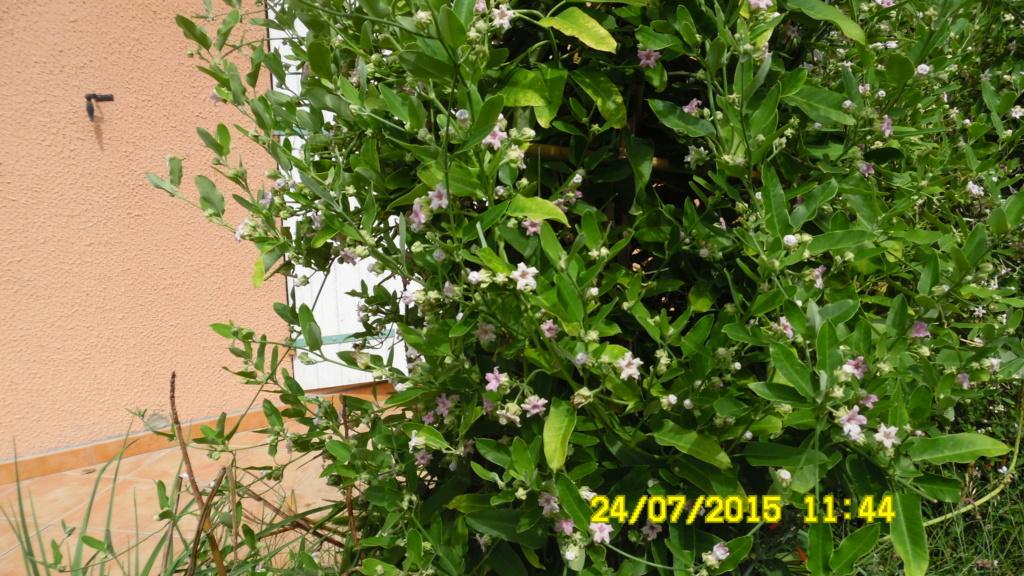plante a identifier et a decouvrir - Page 5 Sam_0012