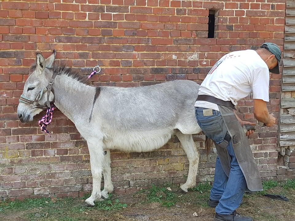 HARRY, Ane ONC, mâle, gris, né en septembre 2017, département 76 Receiv10