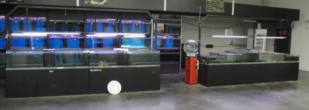 Urgent aquariums pour fishroom [terminé] Dsc01810