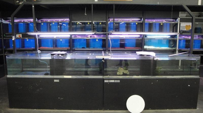 Urgent aquariums pour fishroom [terminé] Dsc01812